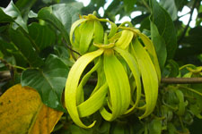 excursion-ylang-ylang-tour-voiture-p